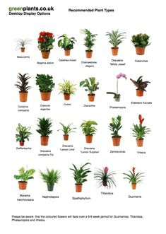 Common Desktop Office Plants Small Office, Buero, Office Decor, Office  Desktop, Best