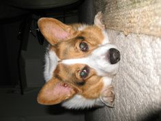Bailey--awe, look, @Mindy 'Fred' VanSickle--same name as B!
