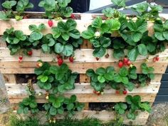 49 Vertical Vegetable Garden Diy Pvc Pipes - SILAHSILAH.COM
