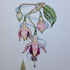 ∞Noel Badges Pugh∞ Learn Watercolor Painting, Kids Watercolor, Watercolor Flowers, Colorful Drawings, Art Drawings, Sketch Note, Botanical Line Drawing, Plant Drawing, Funny Art