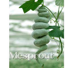 10 sementes/pack Cobra Cabaça Luffa Sementes trichosanthes cucumerina engraçado vegetais DIY Início Jardim Planta Frete grátis