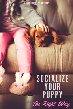 Socializing your puppy is one of the most important things you can do for your dog's future. Here are 3 tips to help you out. What is Socializing Your Puppy? Socializing is the process of your teaching your puppy to get along with other dogs. Your puppy should be able to get along or meet …