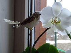 drevita / Vtáčik na dekoráciu Living Room, Plants, Home Living Room, Drawing Room, Plant, Lounge, Family Rooms, Dining Room, Planets
