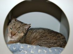 Judy taken a snooze in her hiding box.