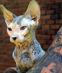 Tough cat has tattoo's. It would be awesome but I don't think I could let my kitty get tattoos.