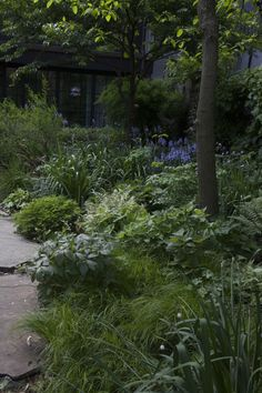 Maria Robledo Brooklyn garden by Lindsey Taylor ; Gardenista...backyard of the brownstone