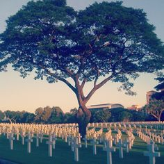 Manila American Cemetery and Memorial, Taguig, Philippines — by Cathy Fuentes. By far the largest burial of US personnel killed during WWII, total of 17,206 graves. You can find some grave...