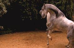 HORSES – Gyűjtemények – Google+