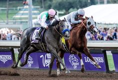 Arrogate team buy Pegasus place from Coolmore : International Horse Breeding and Racing news updated daily, www.thoroughbrednews.com.au
