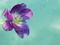 Flower Floating in Water by April Bauknight. Print from Art.com, $29.99