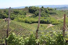 Strada del Prosecco.Valdobbiadene Vineyard, Outdoor, Outdoors, Vine Yard, Vineyard Vines, Outdoor Games, The Great Outdoors