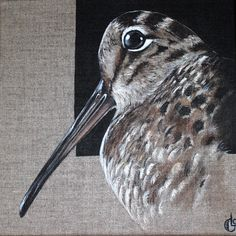 Arctic Fox, Game Birds, Pen Art, Blue Bird, Squirrel, Deer, Wildlife, Grouse, Horses