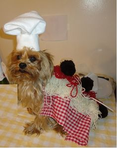 dog milk box dog pinterest - Scary Halloween Meatballs