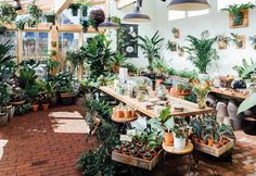 The solarium at Pistils Nursery is a400sq foot glass-enclosed space full of tropical plants, succulents and cacti.