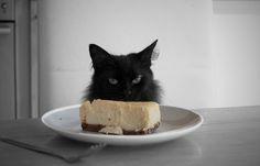 cheesecake and cat