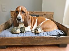 You Want to Toilet Train Or House Break Your Pup – But What's the Difference? Basset Puppies, Bloodhound Dogs, Hound Puppies, Basset Hound Puppy, Beagle Puppy, Dogs And Puppies, Doggies, Drag, Labrador Retriever Dog