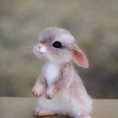 Log in - rabbit pictures . Cute Animals Images, Cute Wild Animals, Baby Animals Pictures, Cute Animal Photos, Cute Stuffed Animals, Cute Funny Animals, Animals Beautiful, Cute Cats, Baby Animals Super Cute