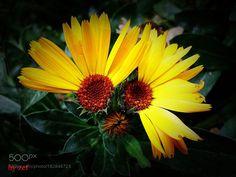 eye of the flowers by ZaferKursatBozkurt #nature #mothernature #travel #traveling #vacation #visiting #trip #holiday #tourism #tourist #photooftheday #amazing #picoftheday