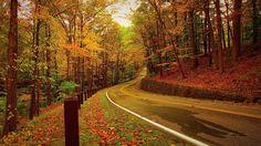 beautiful autumn road photo samsung note5 hd wallpaper download