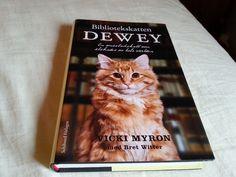 Dewey , The library cat