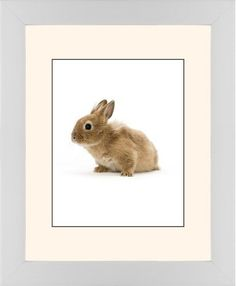 Bunny Framed Print, White, Contemporary, Black, Cream, Single piece, 11 x 14 inches