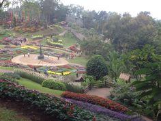 flower garden Chiangmai Thailand