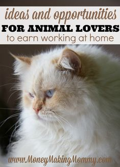 Here is a list of ideas for earning from home for animal lovers. Compassionate, caring people can earn by doing something they love. See these ideas at MoneyMakingMommy.com