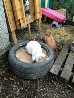 Great idea for providing a digging pit, fill with compost (not dangerous if inge. - Great idea for providing a digging pit, fill with compost (not dangerous if ingested) and your rabb - Rabbit Shed, Rabbit Life, Rabbit Run, Rabbit Toys, Pet Rabbit, Bunny Cages, Rabbit Cages, Diy Bunny Toys, Rabbit Enclosure