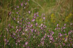Kiskun tájak: Peszéradacsi rétek, erdők Nature Photography, Nature Pictures, Wildlife Photography