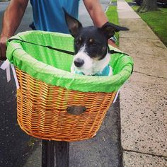 Hand crafted willow bicycle baskets for dogs, dog sunscreen, nautical themed dog collars and leashes Dog Collars & Leashes, Dog Beach, Collar And Leash, Nautical Theme, Dogs, Pet Dogs, Doggies, Dog