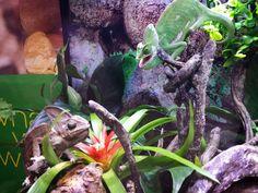 Turtle, Plants, Tortoise Turtle, Planters, Tortoise, Turtles, Plant, Planting, Planets