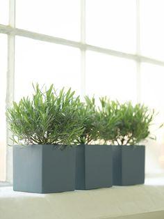 Painted lavender pots in Little Greene paint colour 'Juniper Ash' - little greene company