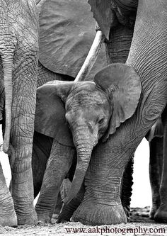 baby ele and its protectors