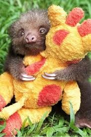 baby sloth with his baby giraffe
