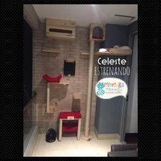 Gimnasio Celeste Cat Houses, Ideas Para, Cat Lovers, Dog, Business, Cats, Home Decor, Cat Scratching Post, Kittens