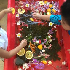 Tea leaves, flowers, and orange slices in the water tub
