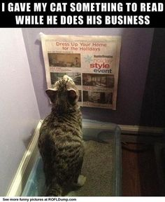 Reading cat #meme #funny #lol #cat