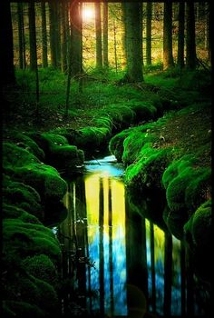 Incredible picture of the setting sun in the forest back round.The stream and the lively green grasses make this photo very eye catching.  http://www.spasandstuff.com/hot-tubs.html