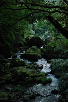 stream surrounded by green