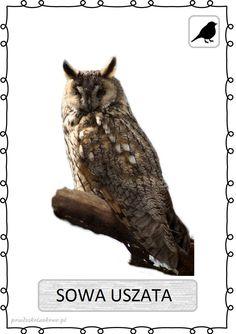 Animal Activities For Kids, Polish Language, Bird Theme, Classroom Themes, Poland, Preschool, Birds, Education, History