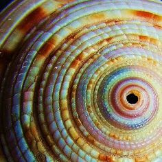 Spiral in nature by Tina Negus
