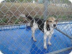 New Kent, VA - Beagle Mix. Meet Winter a Dog for Adoption.