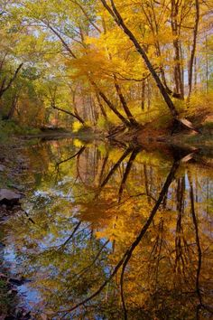 reflecting Autumn's golden moment