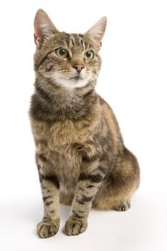 There's lot of good reasons for neutering male cats and few, if any, bad ones. Worrying that Kitty might suffer a urinary blockage if he's neutered is not one of them. Only a small percentage of cats ever get urinary blockages. Learn the ways to help prevent this problem.