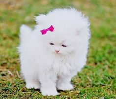 Kitty style is so adoreable