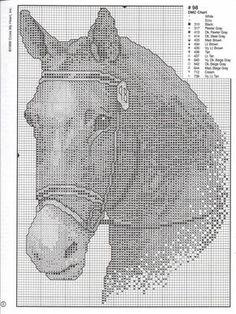 cavalli_02.jpg (1101×1472)