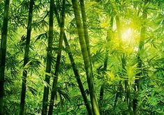 34 - BAMBOO FOREST - W+G