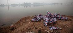 Ανατριχιαστικές εικόνες - Xιλιάδες κουφάρια γουρουνιών στις όχθες των μολυσμένων ποταμιών της Κίνας