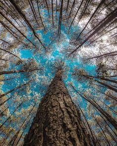 Taking a different perspective at Sierra Norte de Puebla, Photo by Tree Photography, Landscape Photography, Image Nature, Nature Nature, Nature Pictures, Belle Photo, Amazing Nature, Beautiful Landscapes, Beautiful World