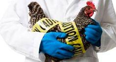 O governo do distrito determinou uma suspensão às vendas de aves a partir de quinta-feira (22) para reduzir o risco de infecção.